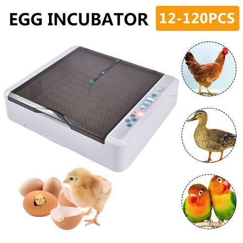 New Design automatic 36 chicken egg incubator